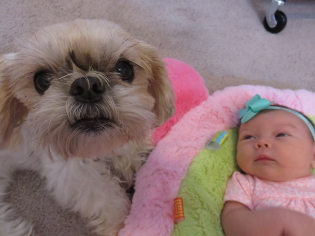 This picture melts my heart! Chloe absolutely loves Avery!
